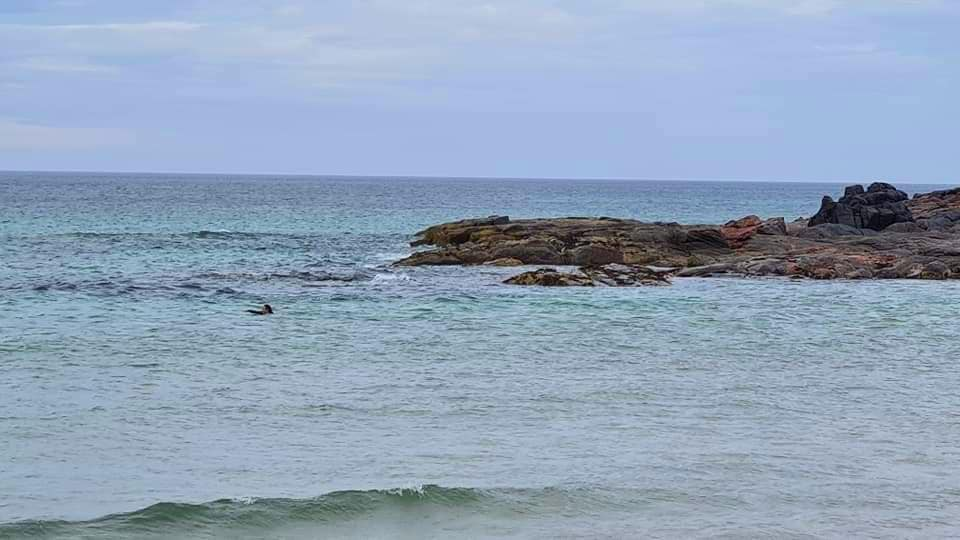A woman swimming in blue ocean waters