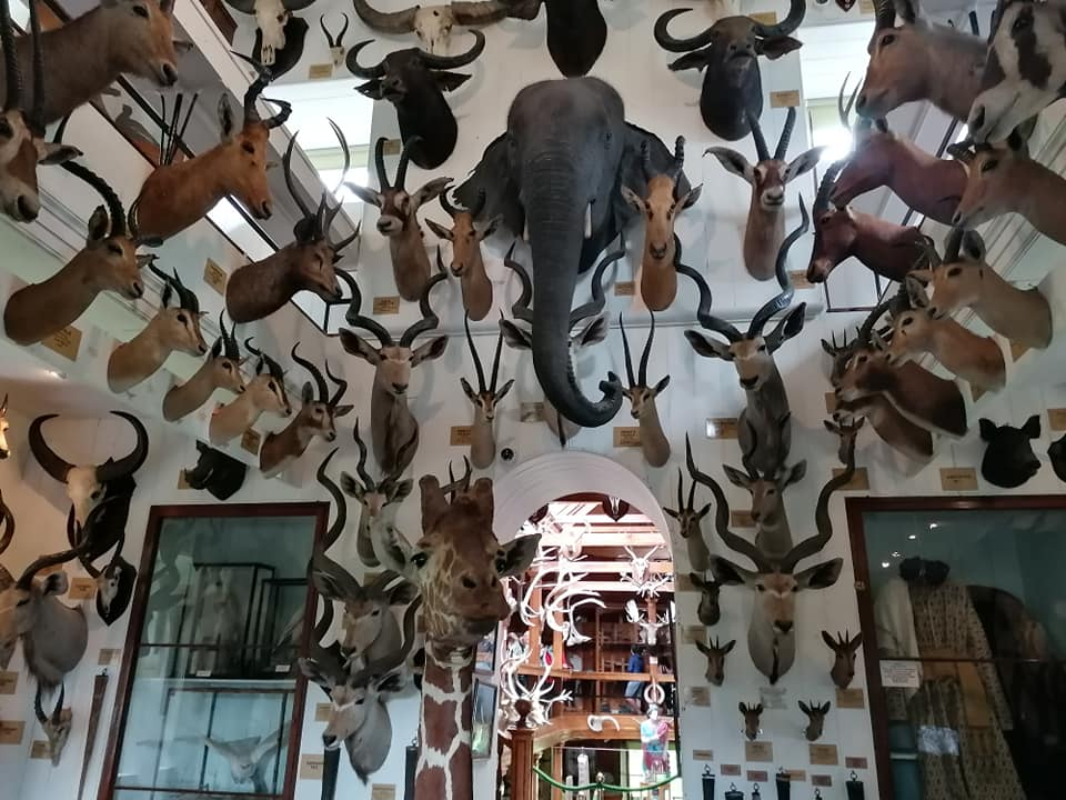 A room full of dozens of animal heads mounted on a wall