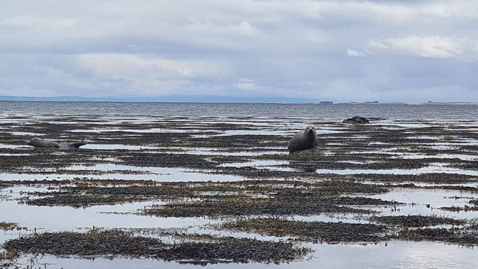 Three seals slumped on rocks